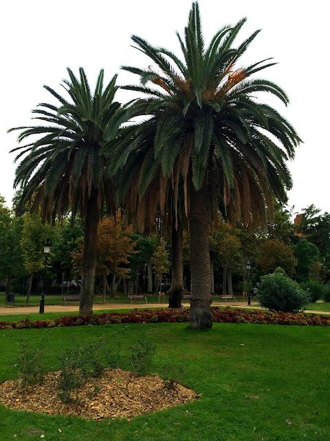 Barcelona, palmy