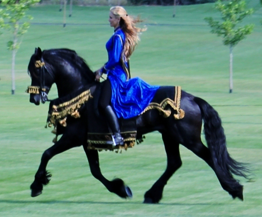 how to ride a friesian horse
