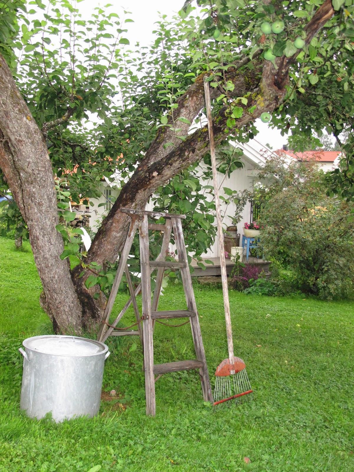 Trines Hus og Hage: august 2014
