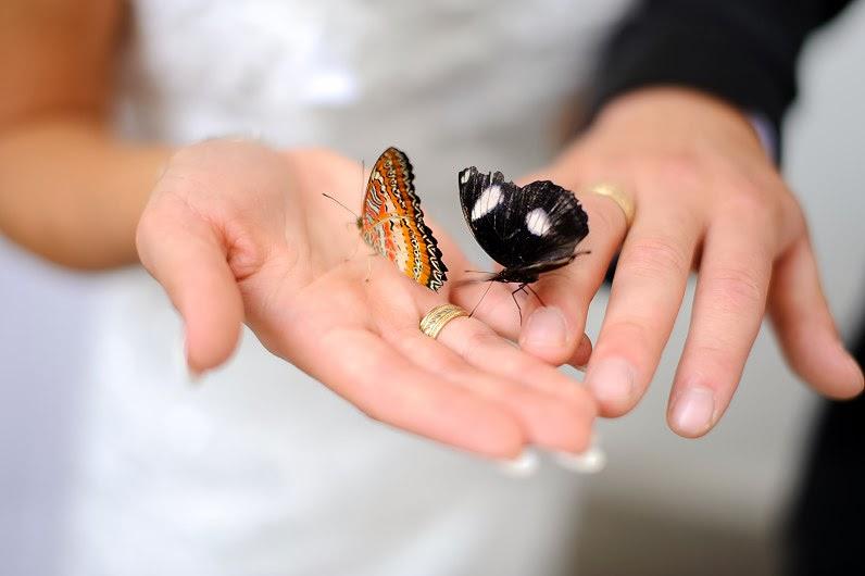 drugeliai per vestuves