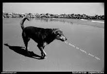 de perros