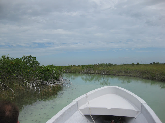 Guided Tour up the Mayan Highway Canals in the Sian Ka'an Biosphere in Tulum, Mexico