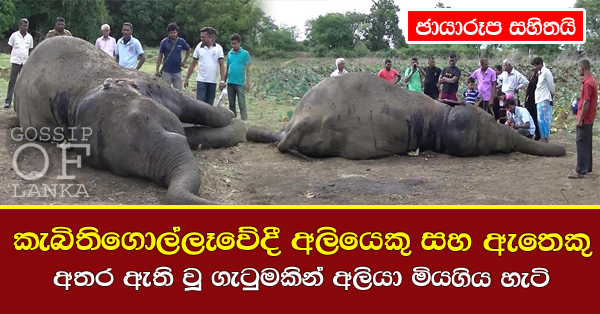 Two elephants fight it out in Kebithigollewa