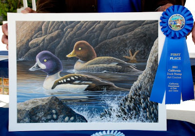 2011 California Duck Stamp by Shari Erickson