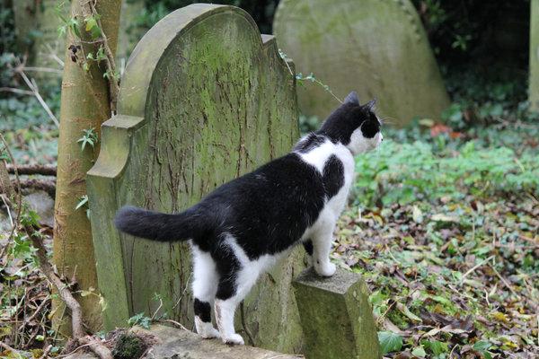 highgate cemetery england