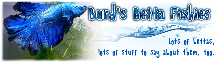 Burd's Betta Fish