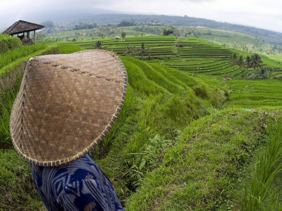 Apakah_Benar_Pendapatan_Rakyat_Indonesia_Rp_5_Juta_Per_Bulan