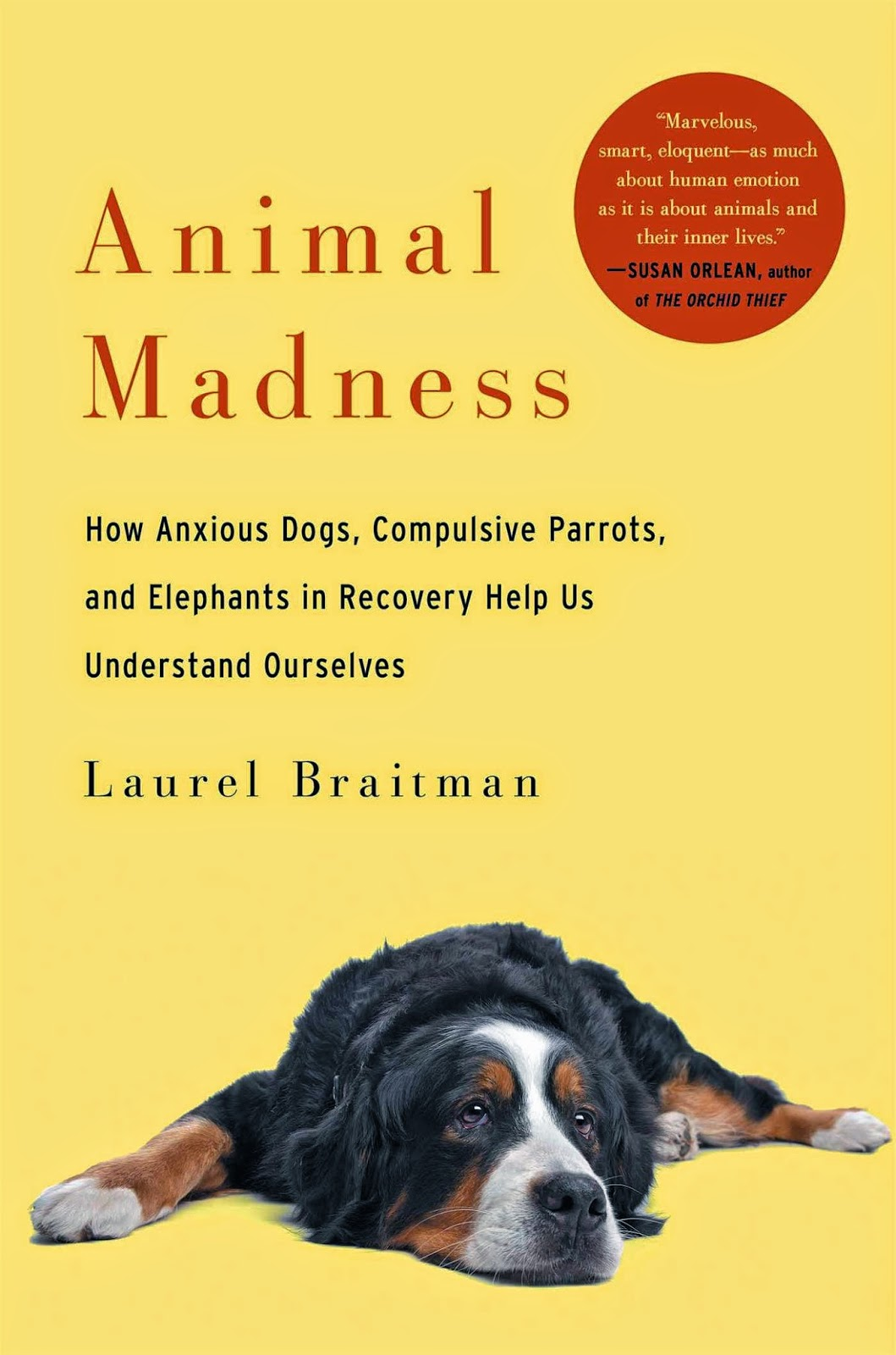 """animal madness"" - Laurel Braitman"