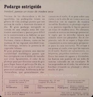 Blog Safari Club, características del Podargo estrigoide