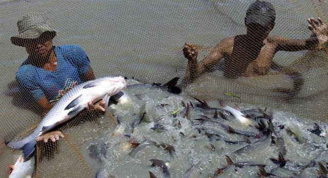Future world how to start a fish farm and how to make it for How to start a fish farm