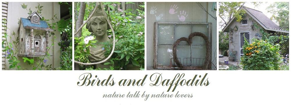 BIRDS & DAFFODILS