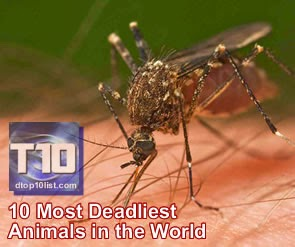Top 10 Most Deadliest Animals in the World