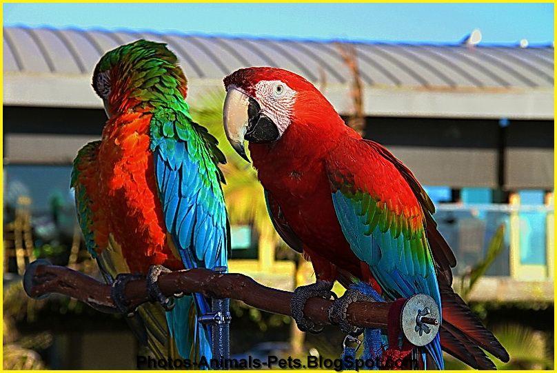 http://4.bp.blogspot.com/-u2ljMzLrhgA/TtyTlMw1GTI/AAAAAAAACb0/goMBbc7zmYI/s1600/parrot.jpg