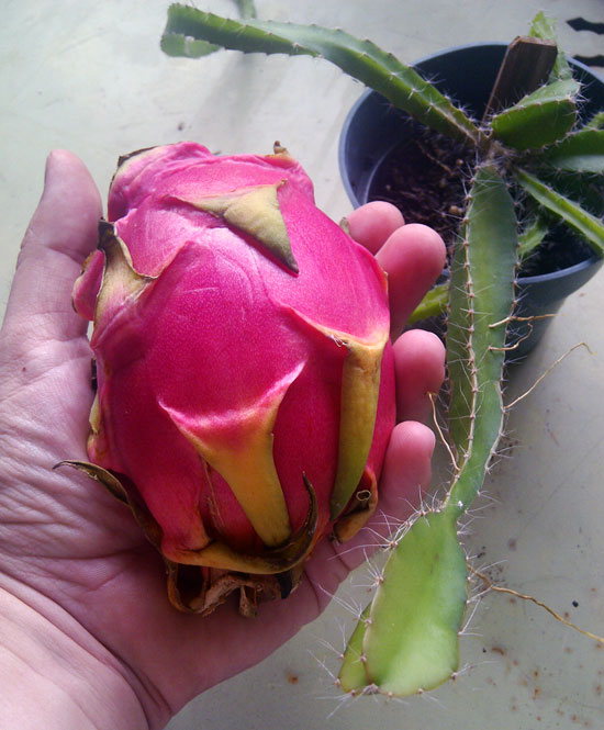The Rainforest Garden: Grow your own Thai Food: 30 ...
