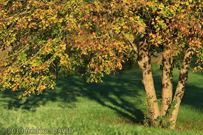 campagne arbres automne Seine-et-Marne