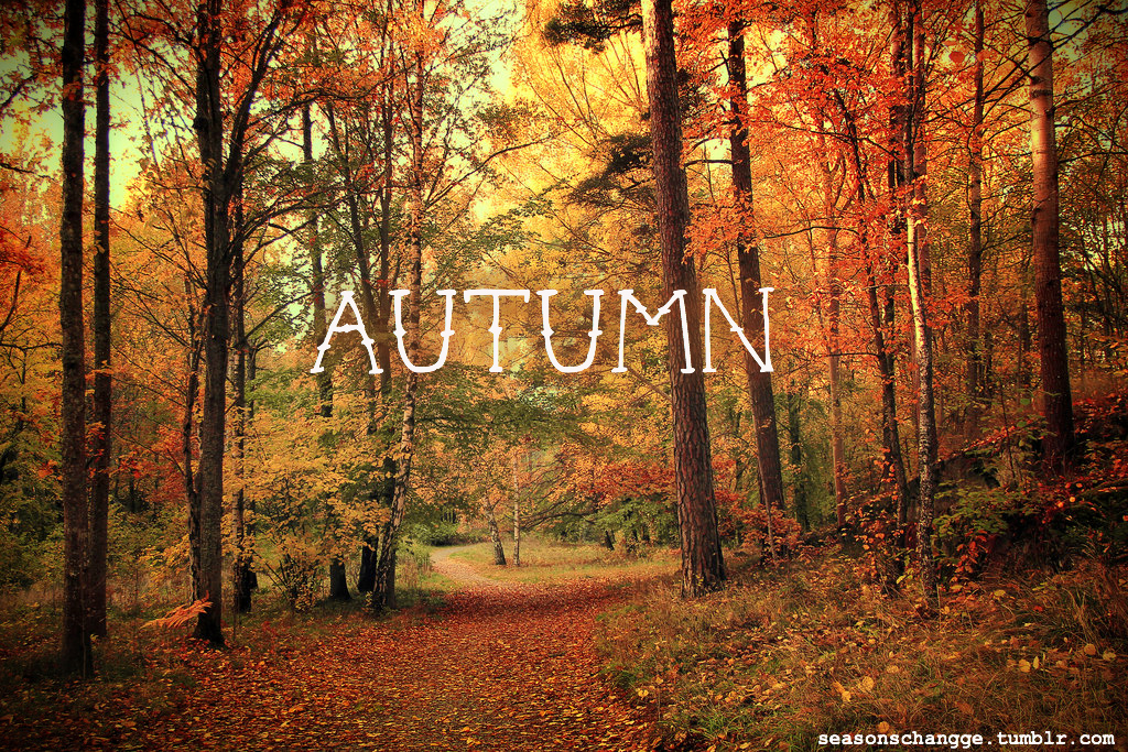 As It Is Now Autumn I Thought I Would Do The Sweater Weather Tag. Lets Get  Started!