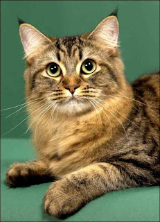 Top 10 Most Friendly Cat Breeds