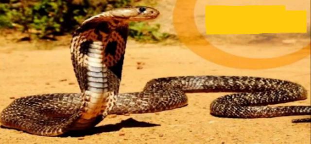 Ayurvedic Treatment for Snake Bite