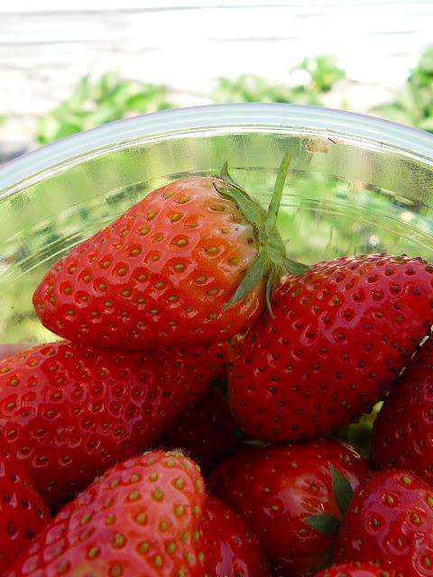 תותים טריים ישר מהשדה