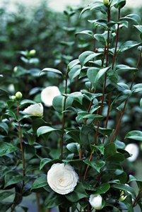 chanel hydra beauty serum 保濕精華