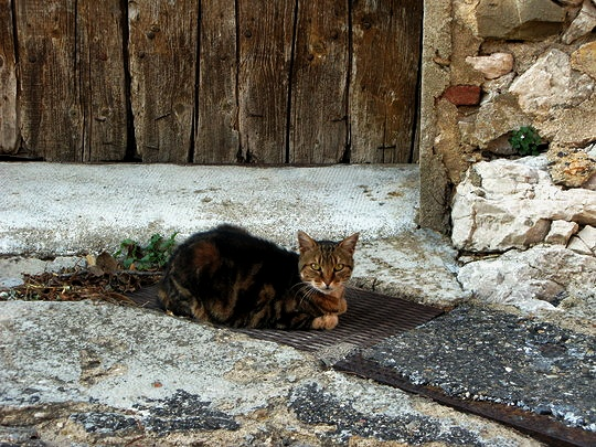 Cat from Cucugnan France