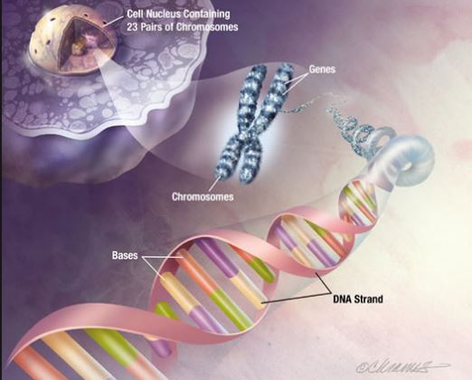 Ethics of Human Genetic Modification