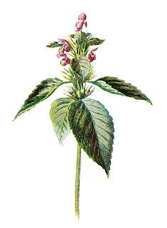 wildflower digital illustration