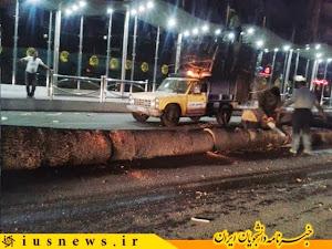 برای درختانِ چنارِ خیابان ولیعصر