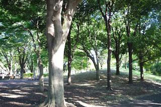 府中公園木漏れ日