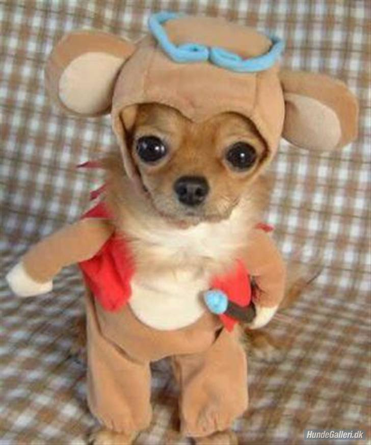 Funny dogs and puppies: Funny dogs in costumes
