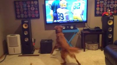 http://fox6now.com/2014/09/09/football-is-back-and-this-dog-can-hardly-contain-his-excitement/