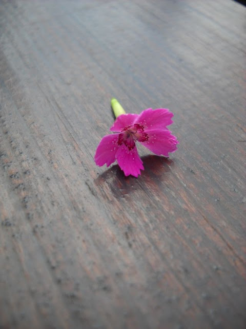 31 sierpnia- Dzień Blogów. Kalendarz świąt nietypowych.Życzenia