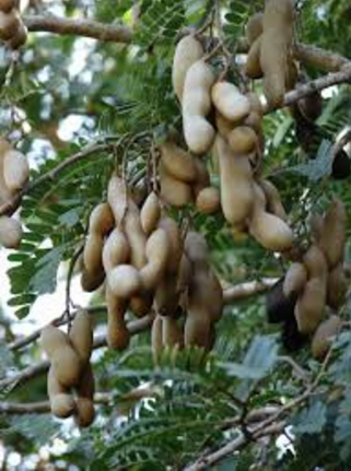 Qualities of Tamarind