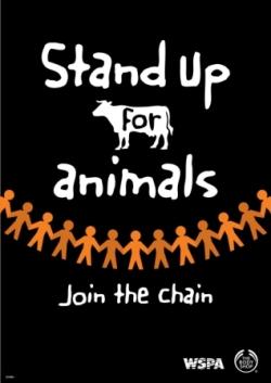 Essay On Animal Cruelty