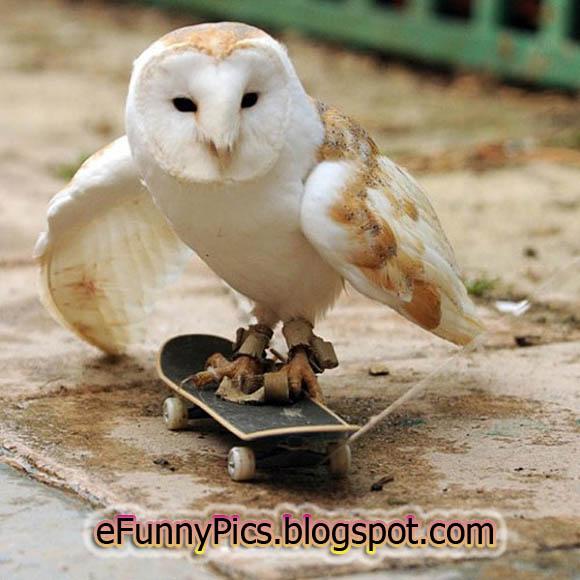 Sliding Owl