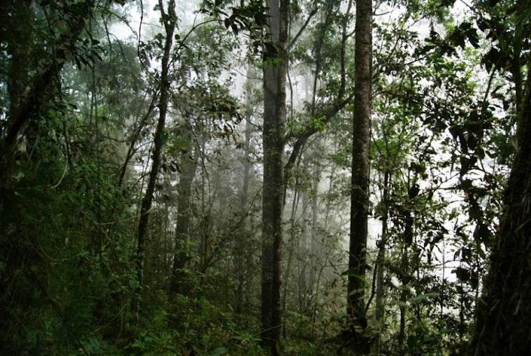 Bosque de Nogales-varios