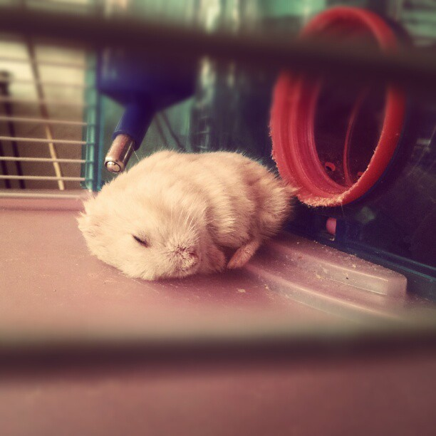 hamsters x Try  walking out the door with cheeks visibly stuffed to the gills.
