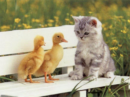foto kucing yang lucu - gambar binatang - foto kucing yang lucu