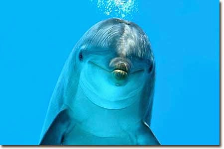 A cute dolphin
