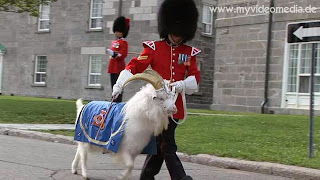 Batisse- the Royal Goat at Changing of the Guard – Quebec