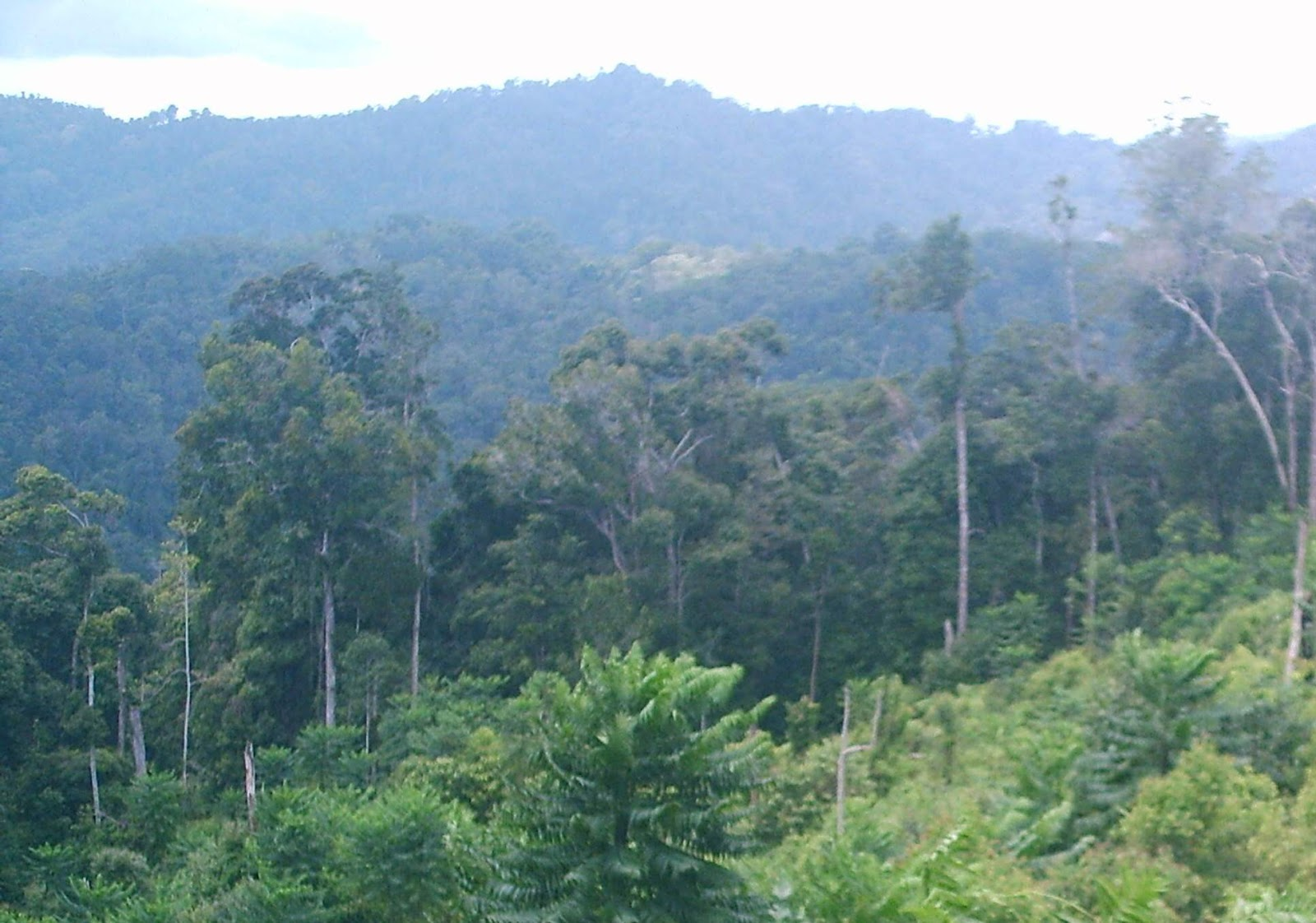 Characteristic of indonesian rainforests