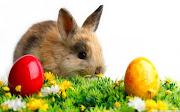 . (mona de Pascua, panquemado, longaniza de Pascua, etc.) conejo pascua