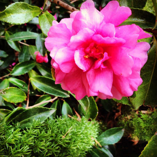 NowThisLife.com - Camellia