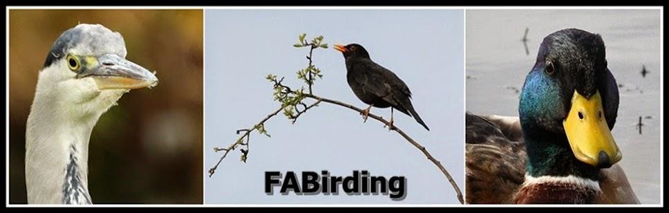 FABirding