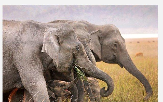 Elephant- wild life at jim corbett national park