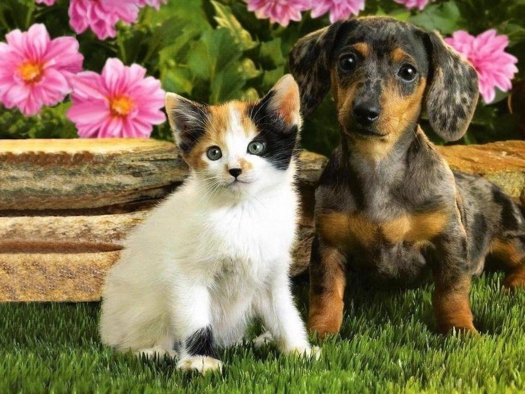 Puppies and Kittens Together
