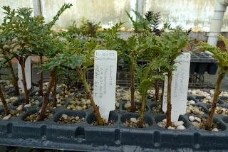 6 Jenis tumbuhan tertua di dunia