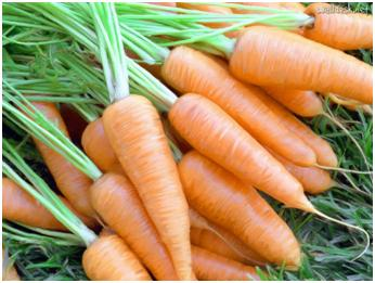 pele-oleosa-como-controlar-cenoura