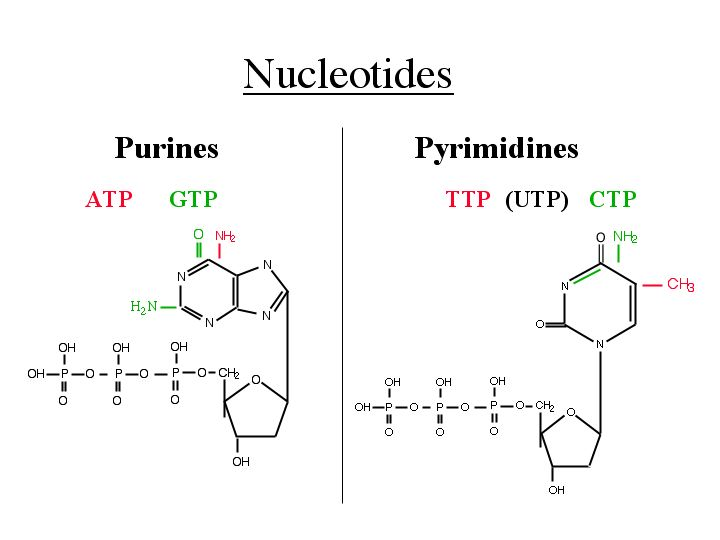 What is Three Parts of Nucleotide ? | DNA and RNA