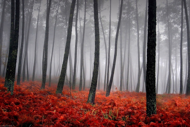 Beautiful Autumn In The Foggy Forest